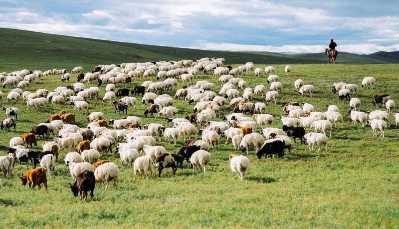 Монгол малын махны хүнс тэжээлийн үнэт чанар